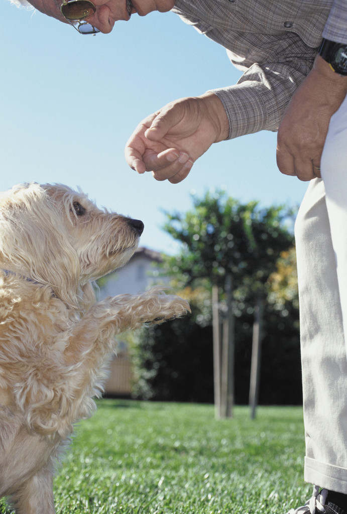 How Old Dogs Learn Interpersonal Skills