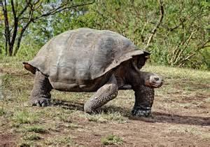 Tortoise step & consensus