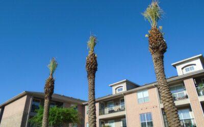 Speaking Gig, Bert the Palm Tree & More